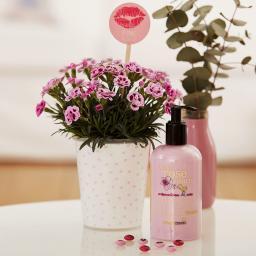 "Nelke Pink Kisses® Friendset 2 ""Sommerduft"" mit blumig duftender Körperlotion von treaclemoon"