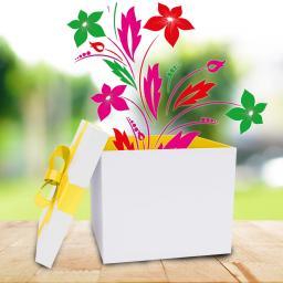 Sommerblumen-Sortiment Pötschkes Spektakel, 18 Pflanzen