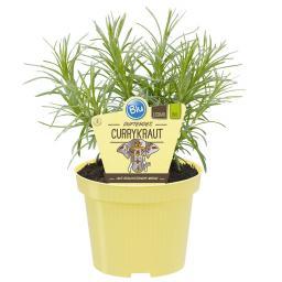 Blu Bio-Kräuterpflanze Currykraut