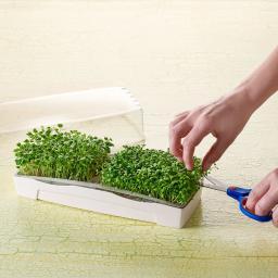 MicroGreen Duo-Garden Anzucht-Set inkl. 2 Pads & 1 Port. Saatgut