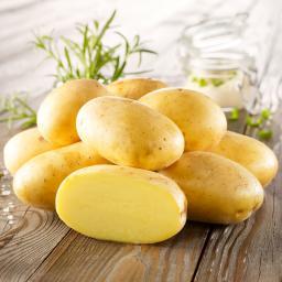 Kartoffel Bernina, 10 Stück