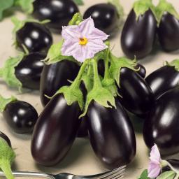 Mini-Auberginenpflanze Diamond Purple, veredelt, im ca. 13 cm-Topf
