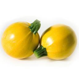 Zucchinipflanze Floridor