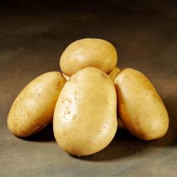 Kartoffel Folva 5 kg