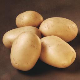 Kartoffel Ballerina 2,5 kg