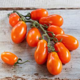 Tomatenpflanze Mirado orange, veredelt, im ca. 12 cm-Topf
