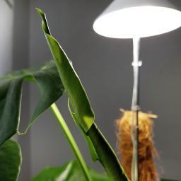Sunlite Pflanzenlampe, 7 W, 28-100 cm, Ø 11, Kabel 4 m,Aluminium, weiß