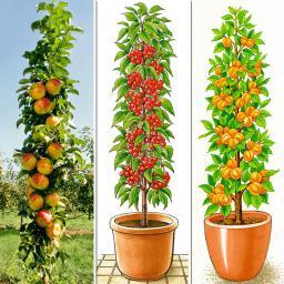 Sortiment Säulen-Obst