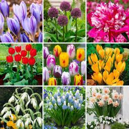 Blumenzwiebel-Sortiment Gärtner Pötschkes Frühlingszauber