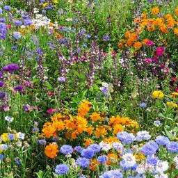 Blumen-Mini-Saatteppich 38 x 17 cm Bienenwiese
