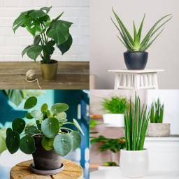 Zimmerpflanzen-Set Moderne Trends