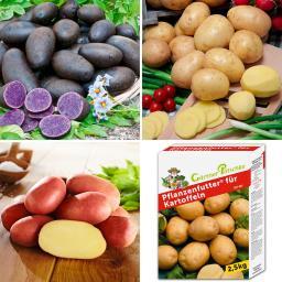 Pflanzkartoffel-Sortiment Bunter Kartoffelkorb