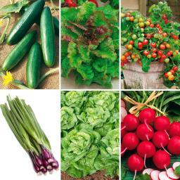 Saatgut-Sortiment Bunter Salatteller