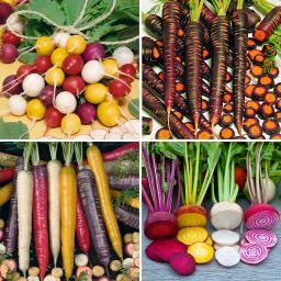 Saatgut-Sortiment Bunte Gemüsespezialitäten