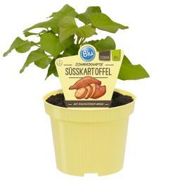 Blu Bio Süßkartoffel