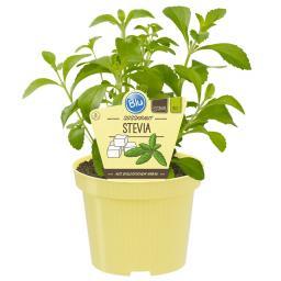 Blu Bio Süßkraut Stevia