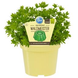 Blu Bio Waldmeister