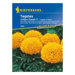 Tagetes Antigua Orange F1