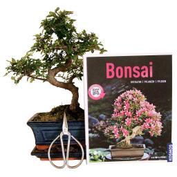 Bonsai Anfänger-Set - chinesische Ulme
