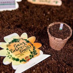 10 Saatgut-Sticks zur einfachen Anzucht, Steinkraut