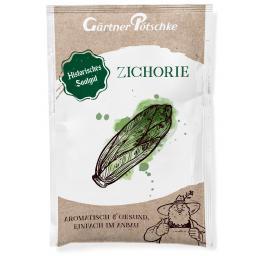Salatsamen Zichorie Zuckerhut