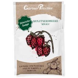 Monatserdbeerensamen Rügen