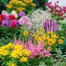 Staudenbeet-Set Sommer Garten