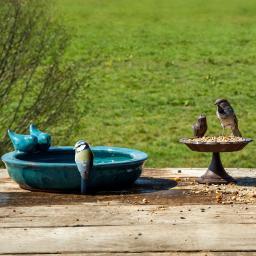 Vogeltränke Paradies, glasierte Keramik,  Petrol, ca. 30 cm