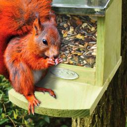Eichhörnchen Futterhaus, mit Zinkdach und Plexiglasscheibe