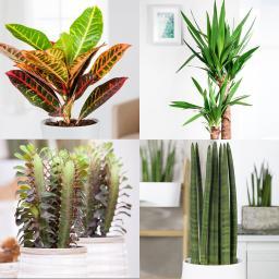 Zimmerpflanzen-Sortiment Sonnenplatz