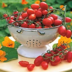 Tomatenpflanze Cupido, veredelt, im ca. 12 cm-Topf