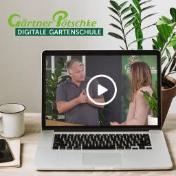 Online-Kurs - Mein kleines Zimmerpflanzen-1x1