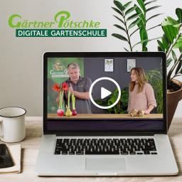 Online-Kurs Amaryllis - Pflegeanleitung für das ganze Jahr