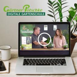 Online-Kurs Flaschengärten - Alles rund um den neuen Trend