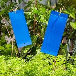 Blautafeln mit Aufhänger, 10 Stück