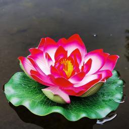 Deko-Seerose Lotus, pink
