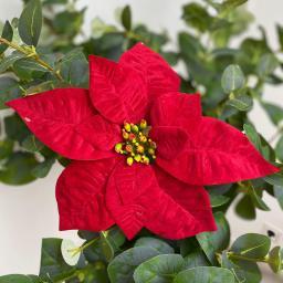 Kunstpflanze Poinsettia, rot