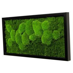 Moosbild Rechteck mit schwarzem Holzrahmen, 60 x 30 cm