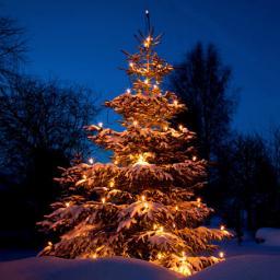 LED-Außenlichterkette f. Weihnachtsbäume (176LEDs)