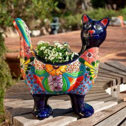 Mexikanischer Pflanz-Kater Rocco