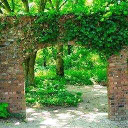 Gartenposter Efeubogen 210 x 150 cm