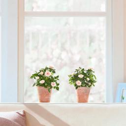 Fenster-Sticker Rosentraum