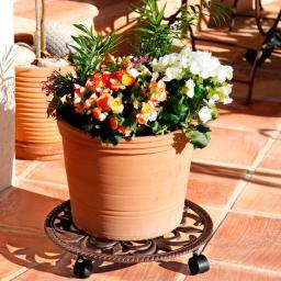 Pflanzenroller Plant-Mobil, ornamental