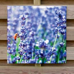 Gartengemälde Lavendel 60x60cm
