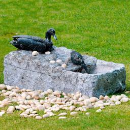Wasserspiel mit Enten