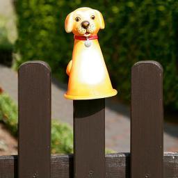 Zaunhocker Hund golden Retriever