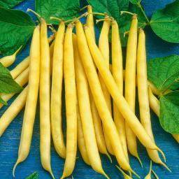 Buschbohnensamen Hildora 125 g