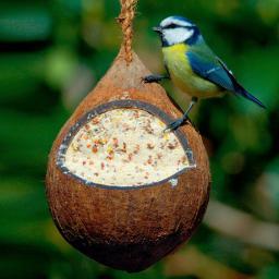 Gefüllte Kokosnuss mit Samen