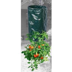 Tomatenpflanzer, hängend