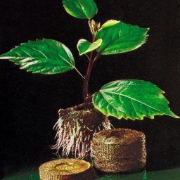 Kokostabletten, 50 Stück, Torffrei
